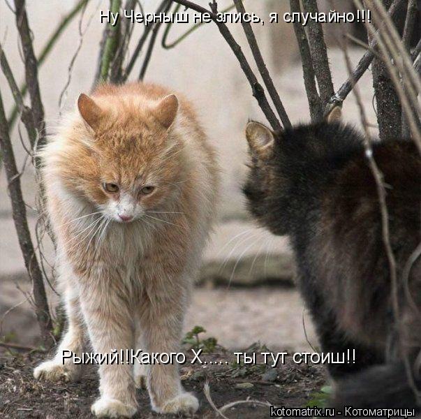 Котоматрица: Ну Черныш не злись, я случайно!!! Рыжий!!Какого Х..... ты тут стоиш!!