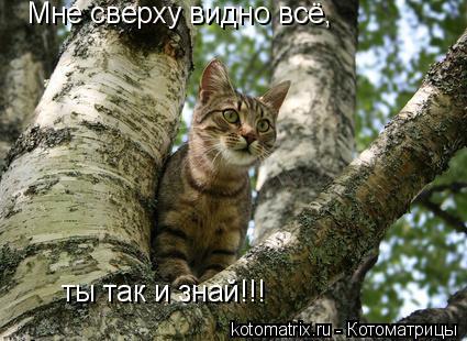 Котоматрица: Мне сверху видно всё, ты так и знай!!!