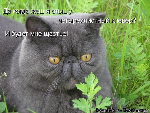Котоматрица: Да когда жеш я отыщу четырёхлистный клевер? И будет мне щастье!
