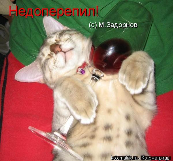 Котоматрица: Недоперепил! (с) М.Задорнов