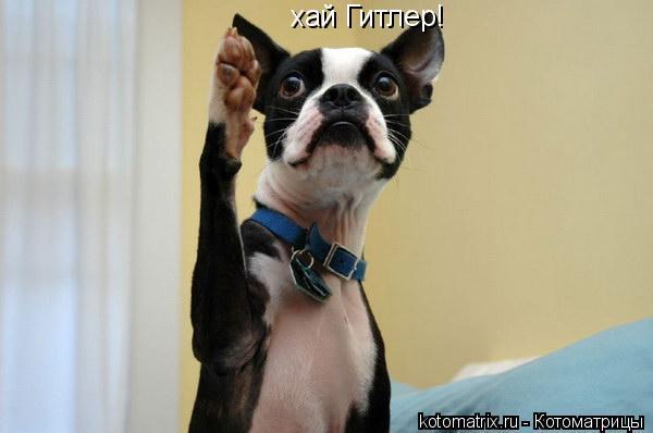 Котоматрица: хай Гитлер!