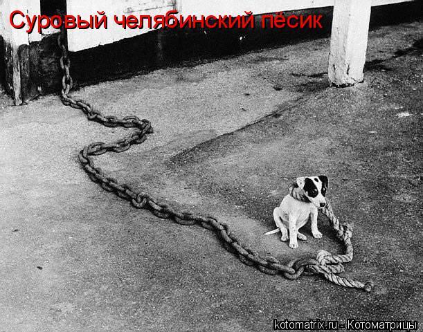 Котоматрица: Суровый челябинский пёсик