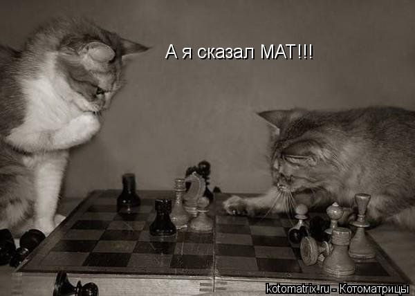 Котоматрица: А я сказал МАТ!!!