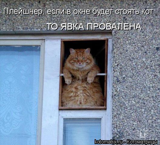 Котоматрица: Плейшнер, если в окне будет стоять кот ТО ЯВКА ПРОВАЛЕНА