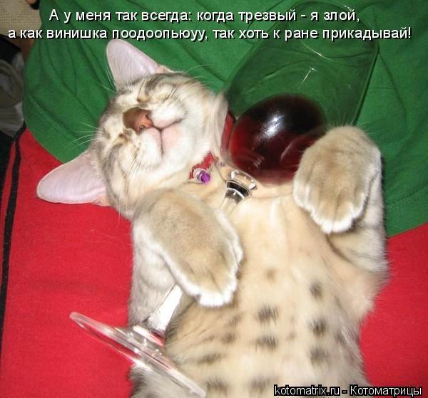 Котоматрица: А у меня так всегда: когда трезвый - я злой, а как винишка поодоопьюуу, так хоть к ране прикадывай!