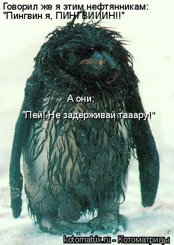 """Котоматрица: Говорил же я этим нефтянникам: """"Пингвин я, ПИНГВИИИН!!"""" А они: """"Пей! Не задерживай тааару!"""""""