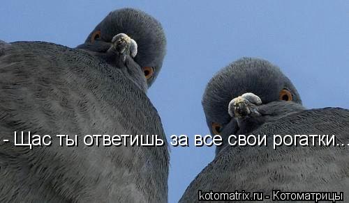 Котоматрица: - Щас ты ответишь за все свои рогатки...