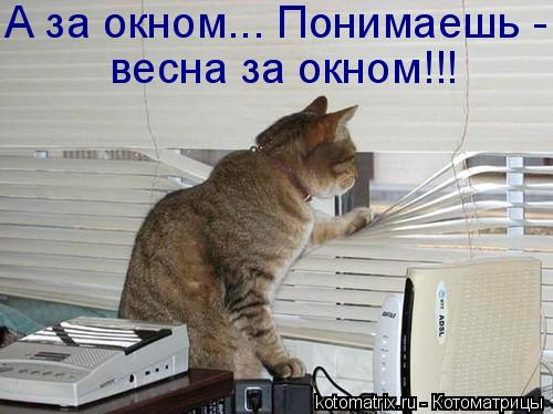 Котоматрица: А за окном... Понимаешь - весна за окном!!!