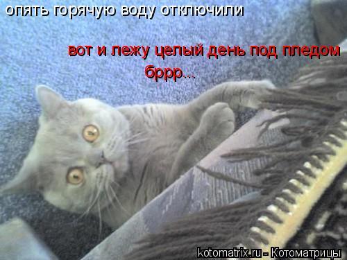 Котоматрица: опять горячую воду отключили вот и лежу целый день под пледом бррр...