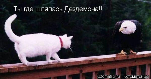 Котоматрица: Ты где шлялась Дездемона!!