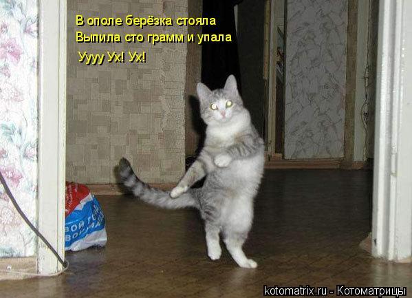 Котоматрица: В ополе берёзка стояла Уууу Ух! Ух! Выпила сто грамм и упала