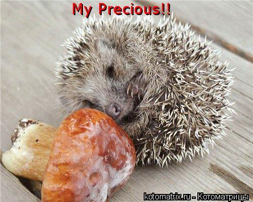Котоматрица: My Precious!!