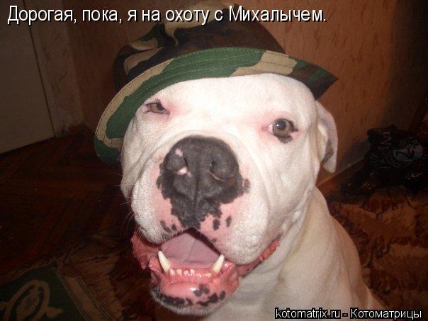 Котоматрица: Дорогая, пока, я на охоту с Михалычем.