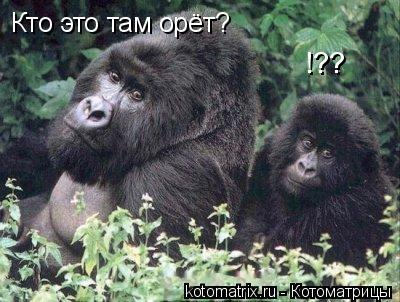 Котоматрица: Кто это там орёт? !??