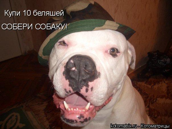 Котоматрица: Купи 10 беляшей СОБЕРИ СОБАКУ!