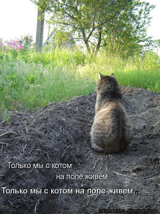 Котоматрица: Только мы с котом на поле живем... Только мы с котом на поле живем