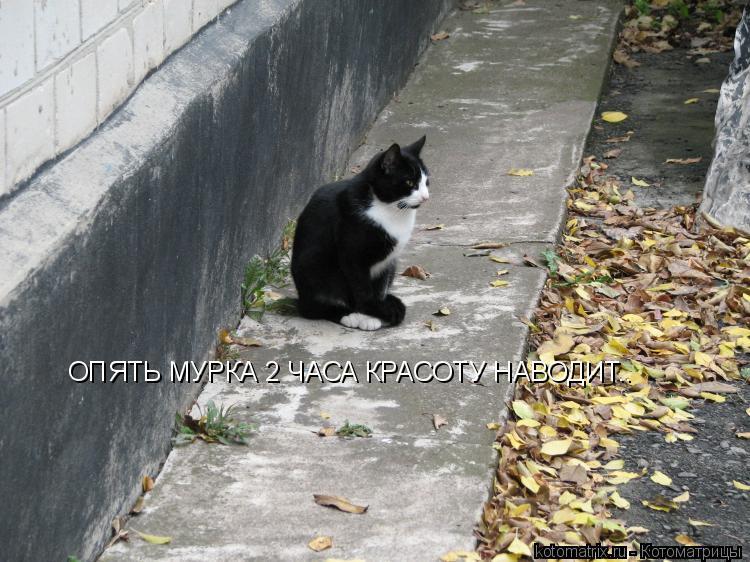 Котоматрица: ОПЯТЬ МУРКА 2 ЧАСА КРАСОТУ НАВОДИТ..