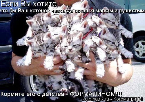 Котоматрица: Если Вы хотите,  что бы Ваш котёнок навсегда остался магким и пушистым? Кормите его с детства - ФОРМАЛИНОМ!!!
