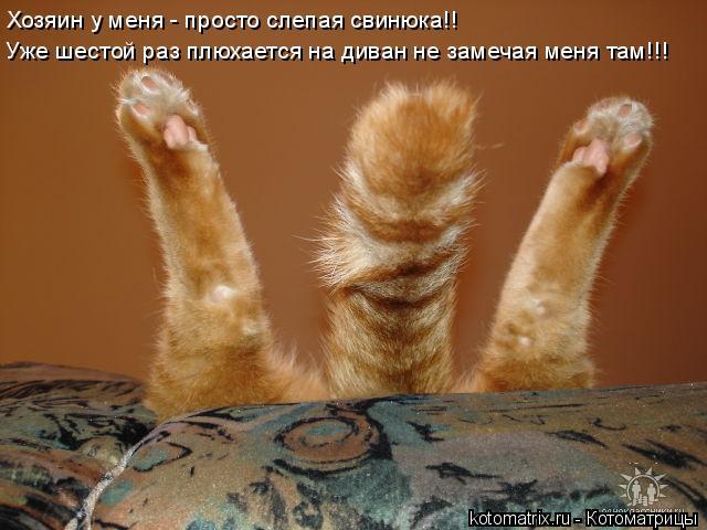 Котоматрица: Хозяин у меня - просто слепая свинюка!! Уже шестой раз плюхается на диван не замечая меня там!!!