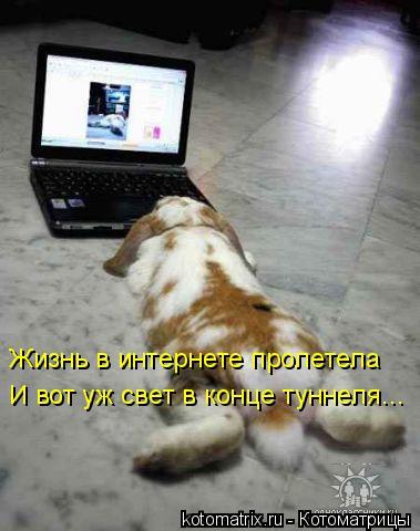 Котоматрица: Жизнь в интернете пролетела И вот уж свет в конце туннеля...