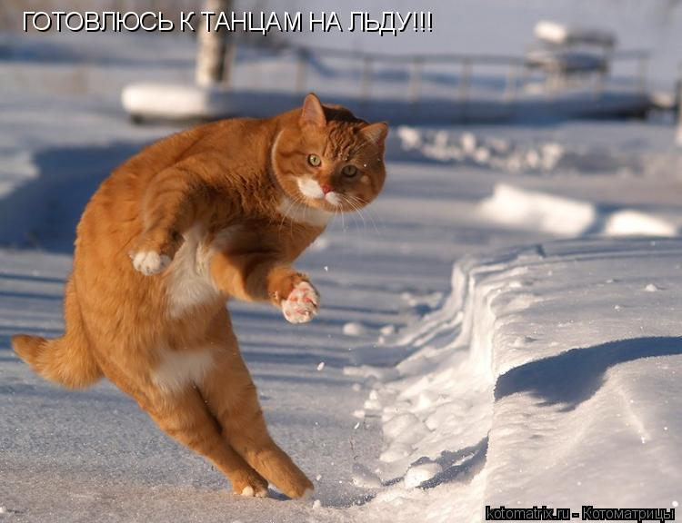 Котоматрица: ГОТОВЛЮСЬ К ТАНЦАМ НА ЛЬДУ!!!