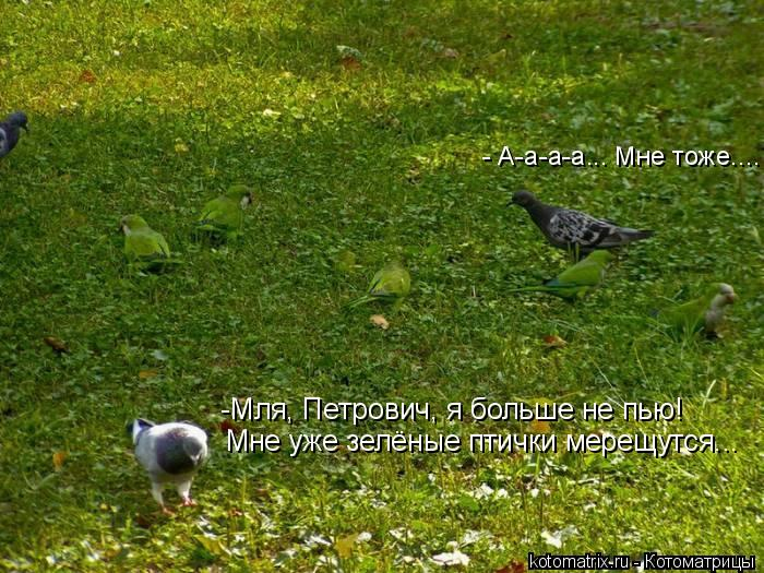Котоматрица: -Мля, Петрович, я больше не пью! Мне уже зелёные птички мерещутся... - А-а-а-а... Мне тоже....