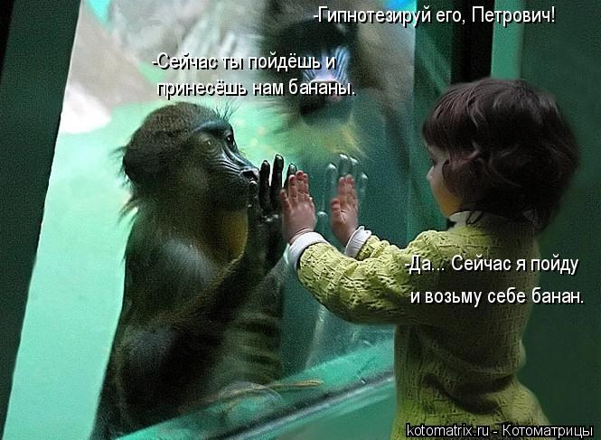 Котоматрица: -Гипнотезируй его, Петрович! -Сейчас ты пойдёшь и  принесёшь нам бананы. -Да... Сейчас я пойду и возьму себе банан.