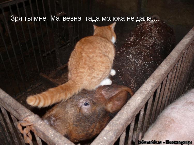 Котоматрица: Зря ты мне, Матвевна, тада молока не дала....