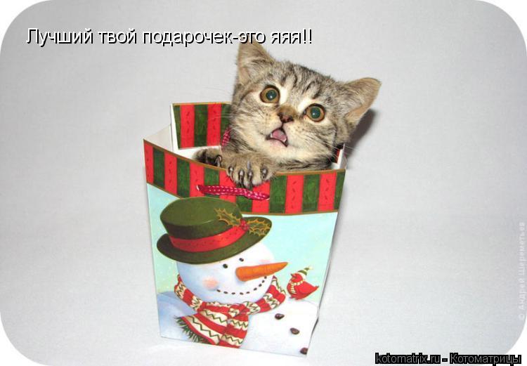Котоматрица: Лучший твой подарочек-это яяя!!