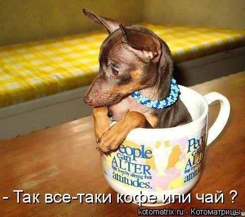 Котоматрица: - Так все-таки кофе или чай ?