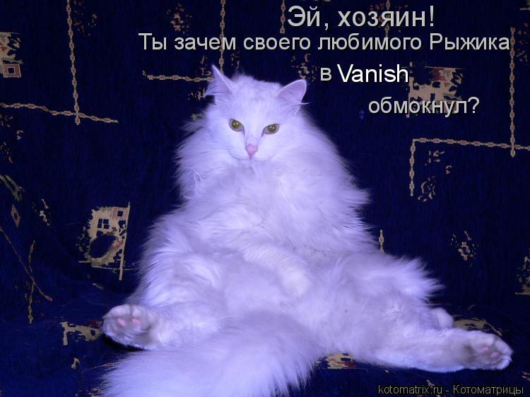 Котоматрица: Эй, хозяин! Ты зачем своего любимого Рыжика  в  Vanish обмокнул?
