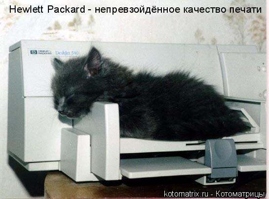 Котоматрица: Hewlett Packard - непревзойдённое качество печати