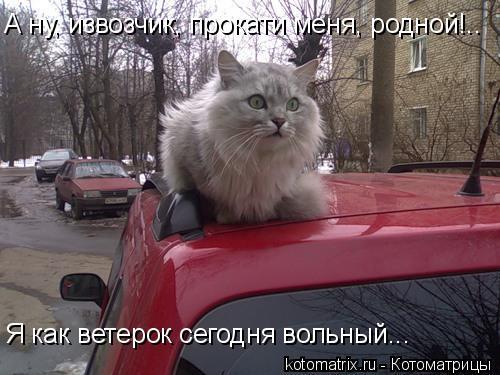 Котоматрица: А ну, извозчик, прокати меня, родной!.. Я как ветерок сегодня вольный...
