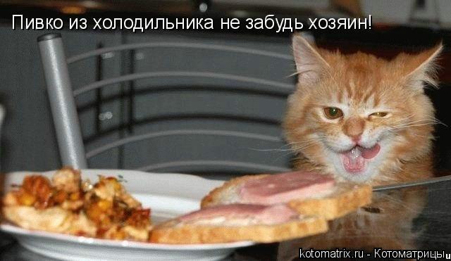 Котоматрица: Пивко из холодильника не забудь хозяин!