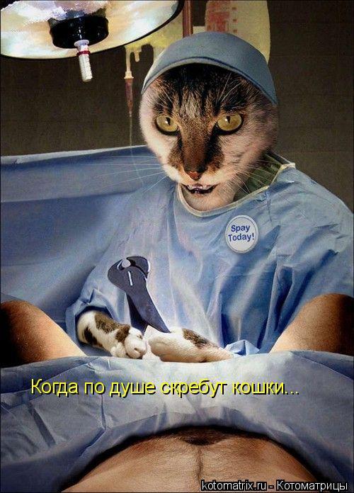 Котоматрица: Когда по душе скребут кошки...