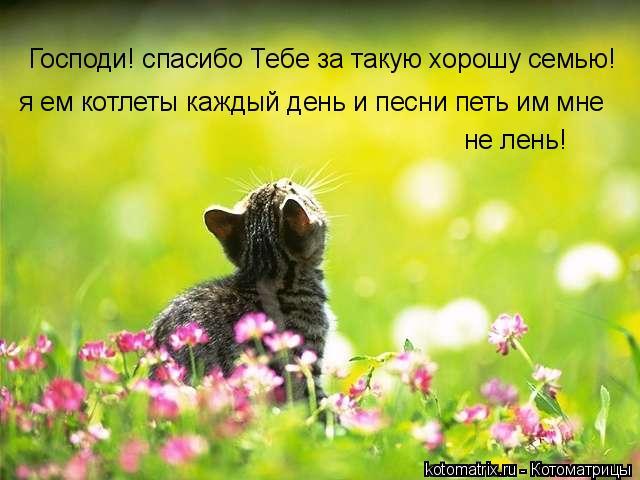 Котоматрица: Господи! спасибо Тебе за такую хорошу семью!  я ем котлеты каждый день и песни петь им мне  не лень!