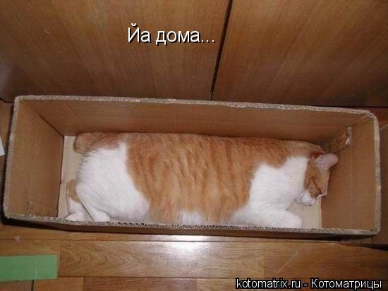 Котоматрица: Йа дома...