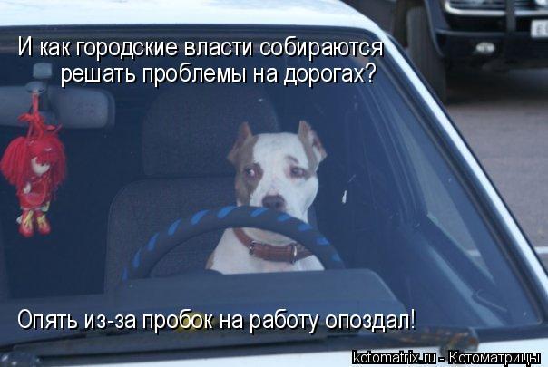 Котоматрица: И как городские власти собираются  решать проблемы на дорогах? Опять из-за пробок на работу опоздал!