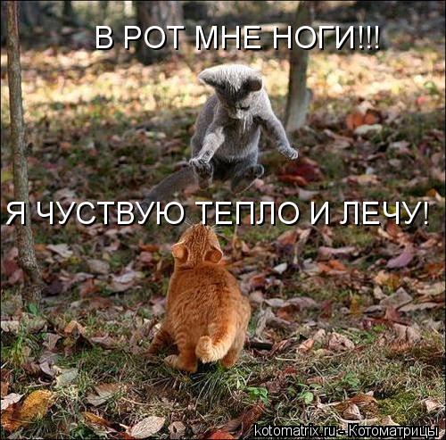 Котоматрица: В РОТ МНЕ НОГИ!!! Я ЧУСТВУЮ ТЕПЛО И ЛЕЧУ!
