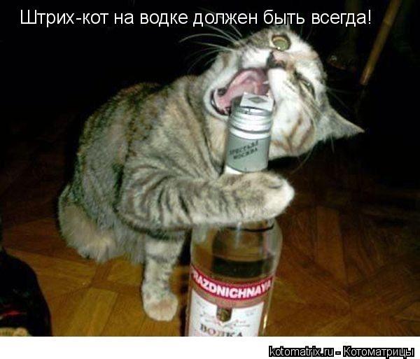 Котоматрица: Штрих-кот на водке должен быть всегда!