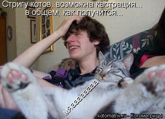 Котоматрица: Стригу котов, возможна кастрация...  в общем, как получится... мяaaaaaaaa