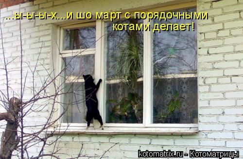 Котоматрица: ...ы-ы-ы-х...и шо март с порядочными  котами делает!
