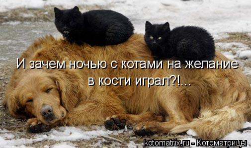 Котоматрица: И зачем ночью с котами на желание  в кости играл?!...
