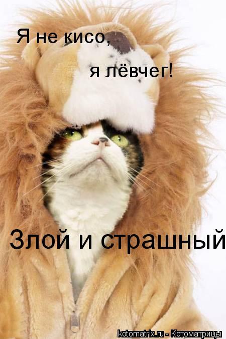 Котоматрица: Я не кисо, я лёвчег! Злой и страшный!!!!