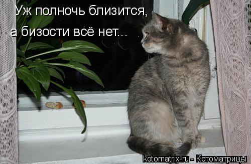 Котоматрица: Уж полночь близится, а бизости всё нет...