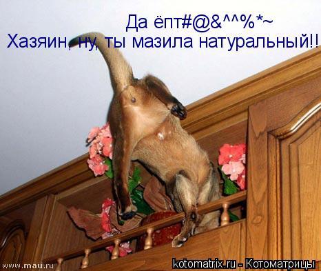 Котоматрица: Да ёпт#@&^^%*~ Хазяин, ну, ты мазила натуральный!!