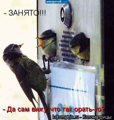 Котоматрица: - ЗАНЯТО!!! - Да сам вижу, что так орать-то?