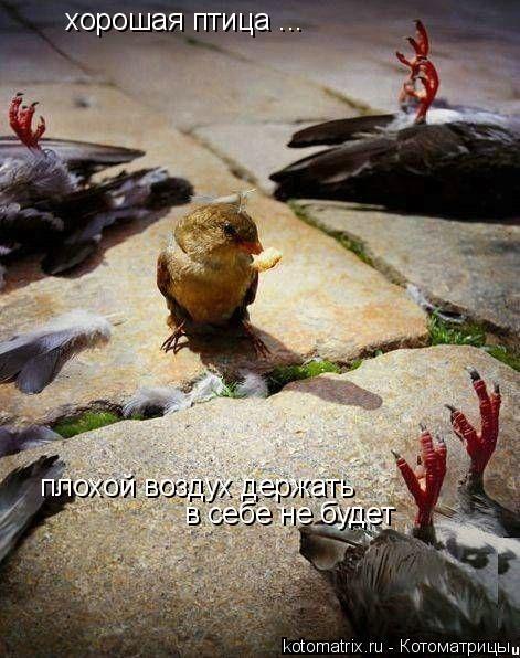 Котоматрица: хорошая птица ... плохой воздух держать в себе не будет