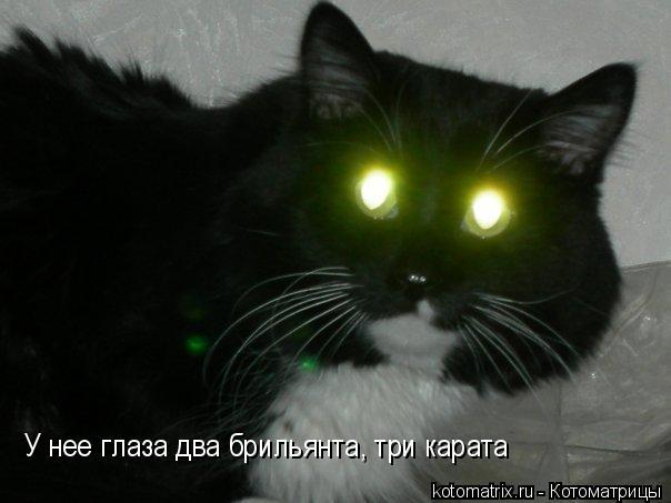 Котоматрица: У нее глаза два брильянта, три карата
