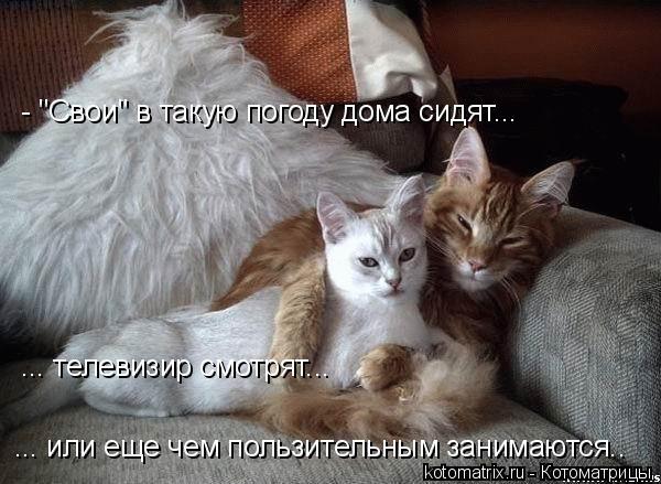 """Котоматрица: - """"Свои"""" в такую погоду дома сидят... ... телевизир смотрят...  ... или еще чем пользительным занимаются.."""